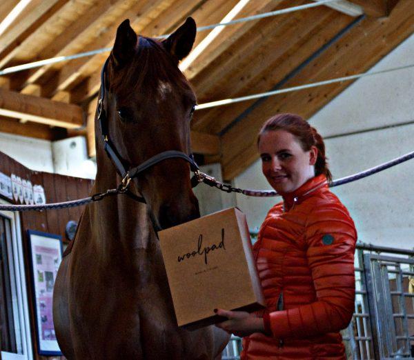 pferd_woolpad_jacky_in_stall